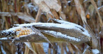 La neve fa bene all'agricoltura dopo un periodo di siccità a Bologna e in Emilia Romagna