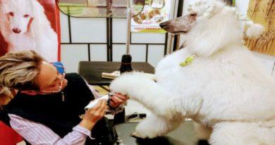 Pedicure a circe apre nuova toelettatura per animali nel centro di bologna