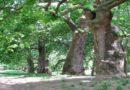 Aumento degli alberi a Bologna proposta dell'assessore Orioli ad aderire a un patto sull'ambiente
