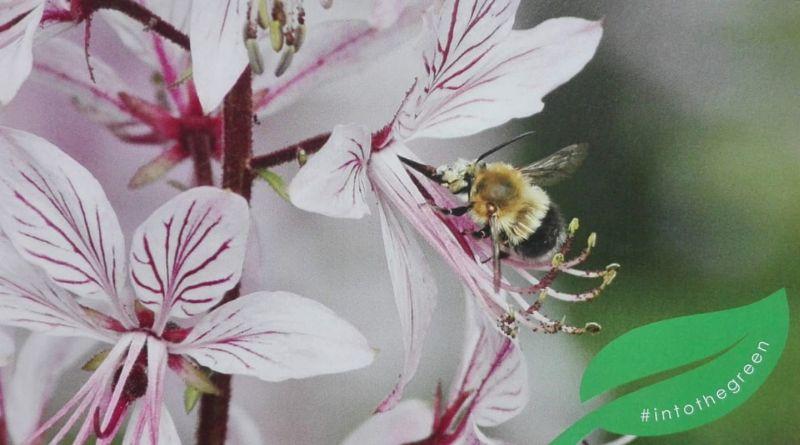 Condividi l'Orto, una giornata per scoprire e sostenere l'Orto Botanico di Bologna