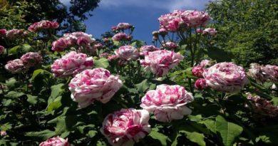 Sboccia la primavera ai Giardini Margherita con Giardini&Terrazzi