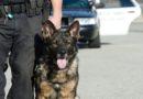 Trenta chili di hashish scovati dal cane poliziotto a Bologna