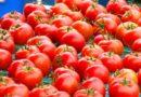 Vernice estratta dalle bucce di pomodoro, da Parma l'idea ecologica