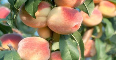 Frutta estiva, crisi senza precedenti