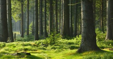 cinque milioni di euro per difendere i boschi in EMilia-Romagna